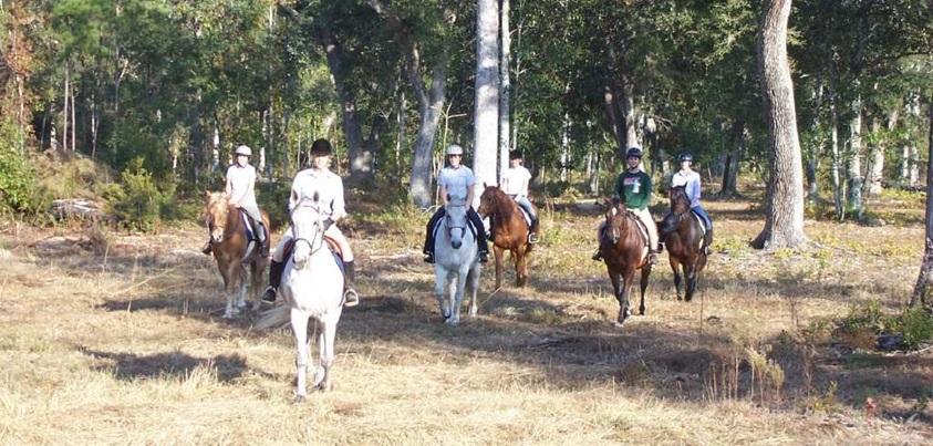 Sono River Stable - Horse boarding Charleston, SC (Johns Island)